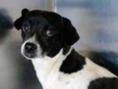 Adopt Amidalla a White Mixed Breed (Small) / Mixed dog in Georgetown