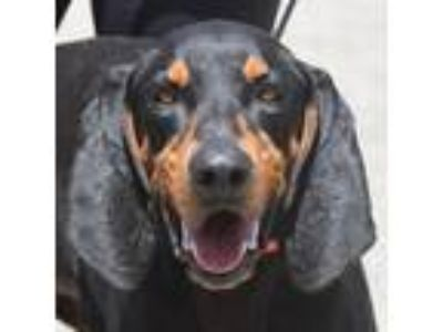 Adopt Quinten a Black - with Brown, Red, Golden, Orange or Chestnut Black and