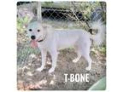 Adopt T-BONE a Shepherd (Unknown Type) / Labrador Retriever / Mixed dog in