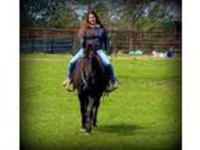 Awesome Beginner Horse