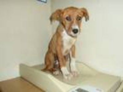 Adopt Ray a Mixed Breed