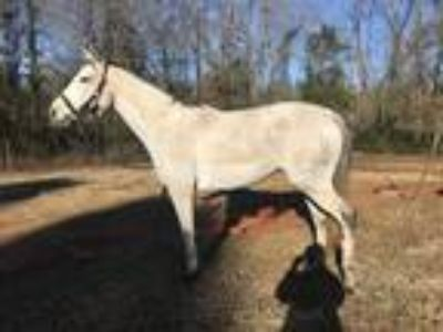 Brood mare or project mare