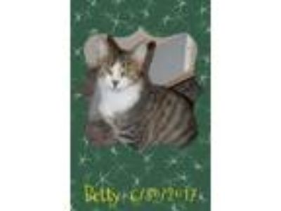 Adopt Betty a Tiger Striped Domestic Shorthair (short coat) cat in Plant City