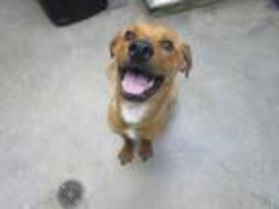 Adopt Jeff (See memo) a Terrier, Hound