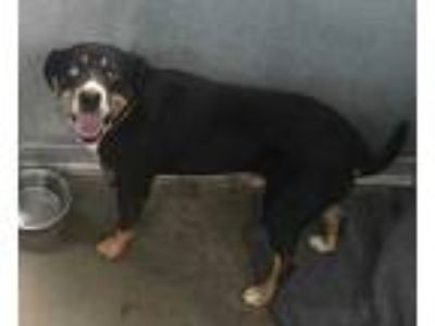 Adopt Archey a Black Shepherd (Unknown Type) / Mixed dog in Selma, CA (25757876)