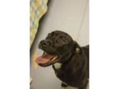 Adopt Donut a Mixed Breed