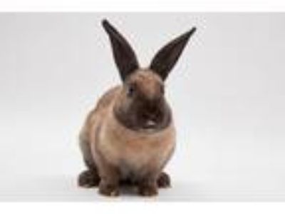 Adopt Donette a Bunny Rabbit