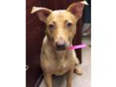 Adopt Lucie a Mixed Breed