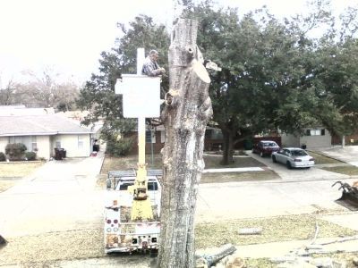ALS TREE  STUMP REMOVAL 504-782-1737 (Metairie - New Orleans