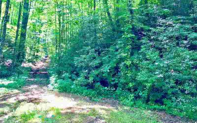 4.9ac Fawn Lane Ellijay, Looking for a easy to build on lot