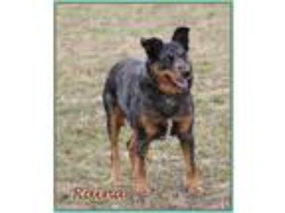 Craigslist Animals And Pets For Adoption Classifieds In Hillsboro