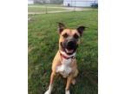 Adopt Rudy a Terrier