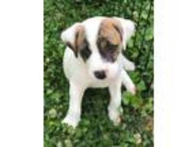 Adopt Baby Frederick a Terrier