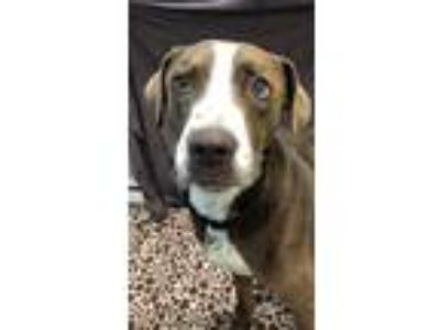 Adopt Scooter a Mixed Breed