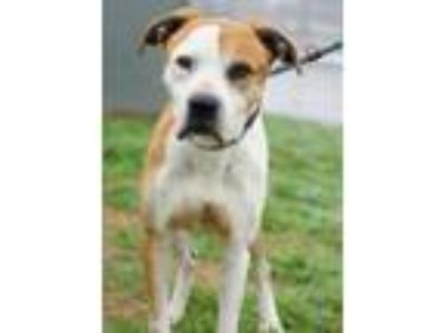 Adopt Mike a Mixed Breed