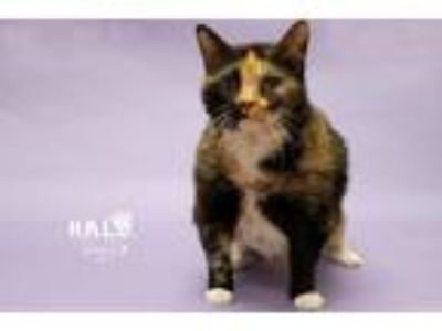 Adopt Jasmine a Domestic Shorthair / Mixed (short coat) cat in Sebastian