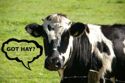 WANTED: HAY FOR MY CATTLE - We'll pay $25 per Bail