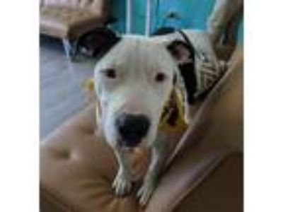 Adopt *Ollie* puppy a Mixed Breed