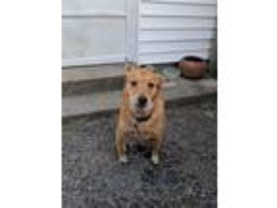 Adopt Dakota a Shepherd (Unknown Type) dog in Xenia, OH (24605799)