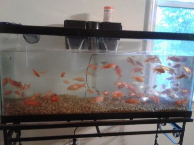 FREE Assorted Gold Fish (Tank not included) Fliter is!