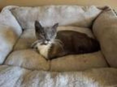 Adopt Esmerelda a Domestic Short Hair