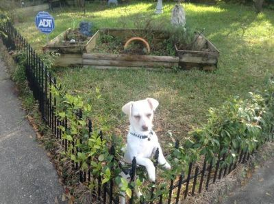 Pup In Need of Good Home