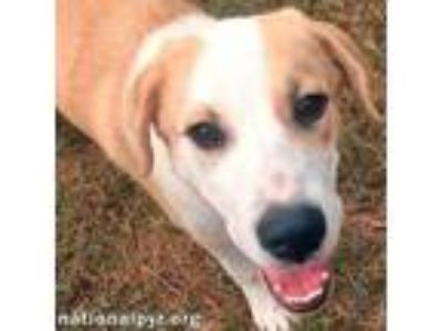 Adopt Annie in AL - pup! a Great Pyrenees