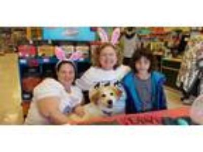Adopt Smiling Hank a Tan/Yellow/Fawn Great Pyrenees / Mixed dog in Statewide