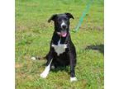 Adopt Betty a Mixed Breed