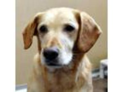 Adopt Maggie -- Bonded Buddy With Jetta a Labrador Retriever / Mixed dog in Des