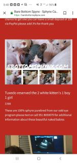 Kittens - For Sale Classifieds in Winchester, California