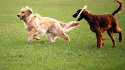 Get The Best Dog Poop Scooper Service At Ecoscoopers!