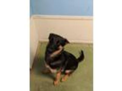 Adopt Lacy a Mixed Breed
