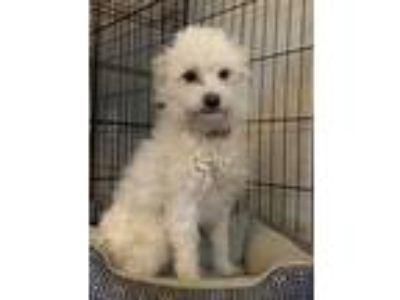 Adopt Jenny a Terrier