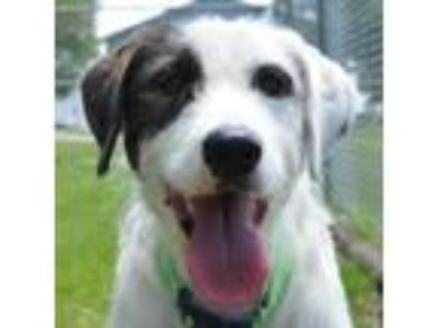Adopt Maybell a Terrier, Mixed Breed