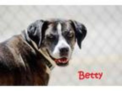 Adopt Betty a Brindle Mixed Breed (Large) / Mixed dog in Charleston