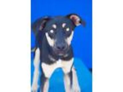 Adopt Alice a Mixed Breed