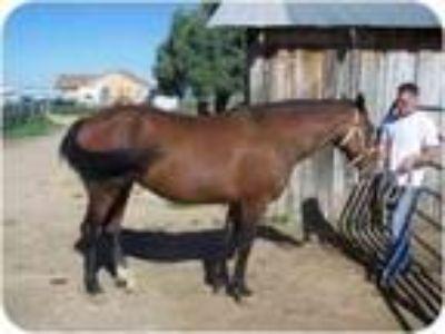 Adopt Wasalla BLM Mustang a Mustang