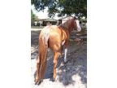 If your looking for a safe gentle amazing beautiful horse Read this ad