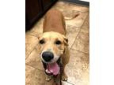 Craigslist Animals And Pets For Adoption Classifieds In Waco