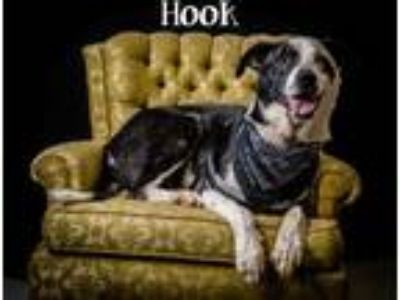 Adopt Hook a Black Border Collie / Mixed dog in North Myrtle Beach