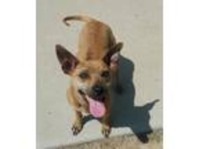 Adopt Selena a Terrier (Unknown Type, Medium) / Mixed dog in Maquoketa