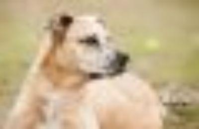 Paula Catahoula Leopard Dog Dog