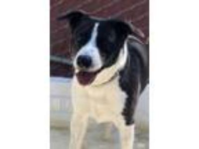 Adopt Nellie a Black Border Collie / Mixed dog in Buellton, CA (24335686)