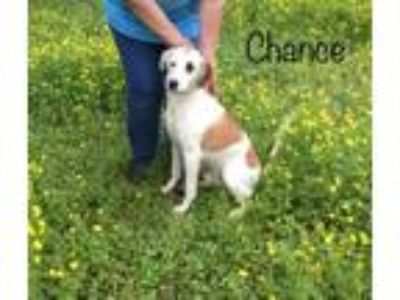 Adopt Foster Needed 5/18 - Chance a Pointer