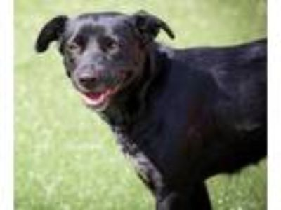 Adopt Bella a Black Mixed Breed (Large) / Mixed dog in Cartersville