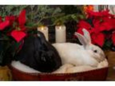 Adopt Guinness & Poppy a Bunny Rabbit