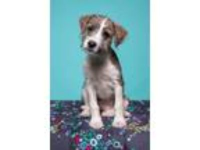 Adopt Bailey a Mixed Breed