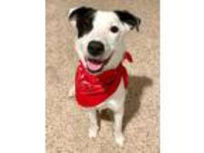 Adopt Betty a Border Collie