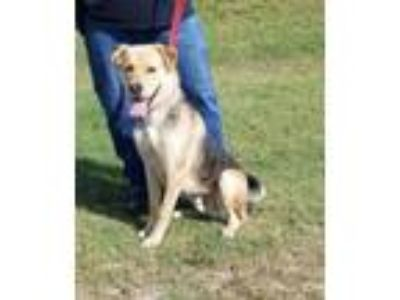 Adopt TOBY a Black Shepherd (Unknown Type) / Mixed dog in Clinton, NC (25756012)